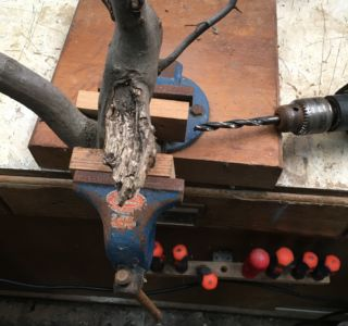 Bohrarbeiten an Ast/Baum